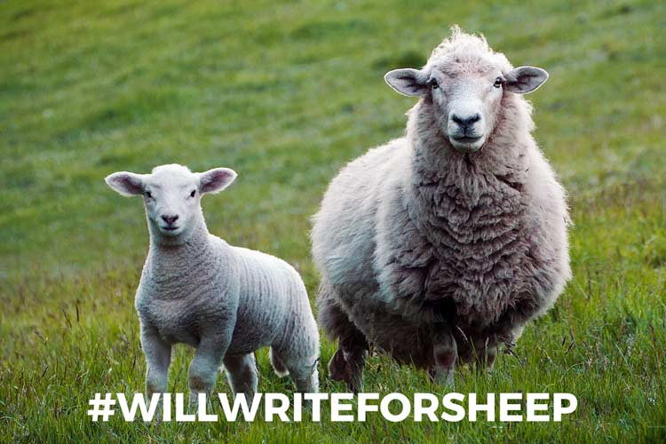 #willwriteforsheep