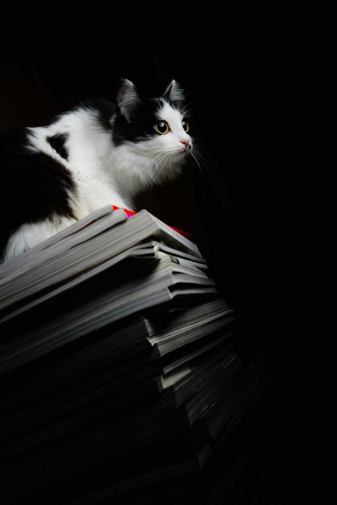 cat on stacks of books